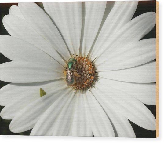 Green Fly On White Flower Wood Print