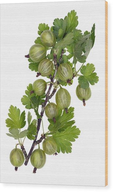 Green Forest Berries Wood Print by Aleksandr Volkov