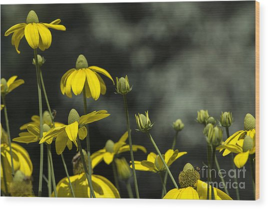 Green Headed Coneflower Wood Print