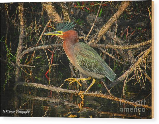 Green Heron Basking In Sunlight Wood Print