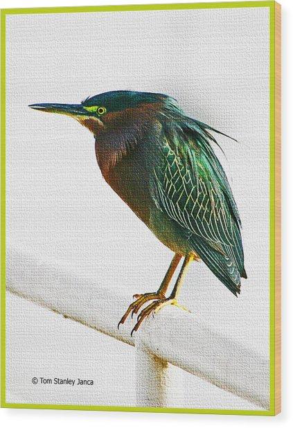 Green Heron In Scottsdale Wood Print