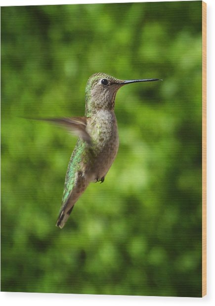 Green Hummingbird Wood Print