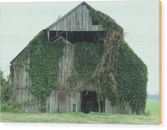 Green Ivy Barn Wood Print by Terry Scrivner