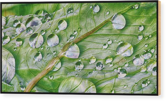 Green Leaf And Rain Drops Wood Print