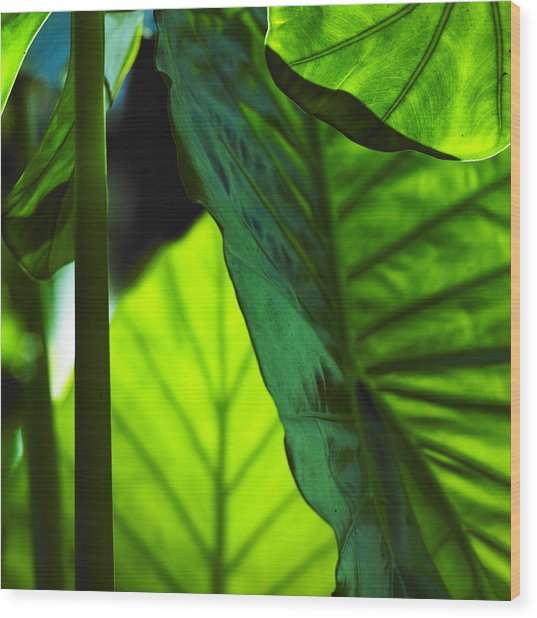 Green Leaf Trilogy I Wood Print