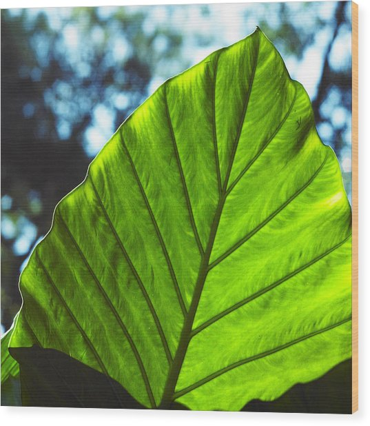 Green Leaf Trilogy II Wood Print