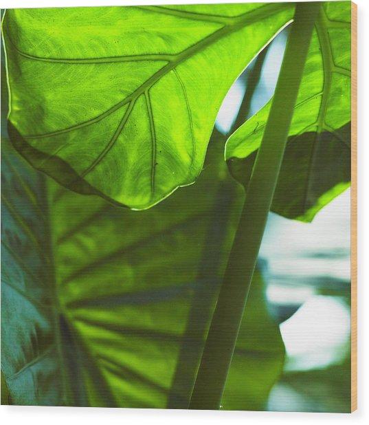 Green Leaf Trilogy IIi Wood Print