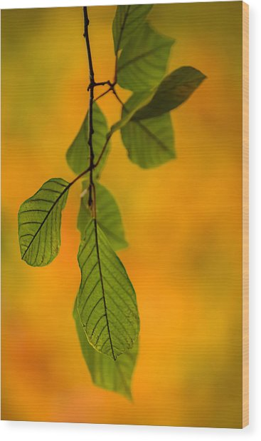 Green Leaves In Autumn Wood Print