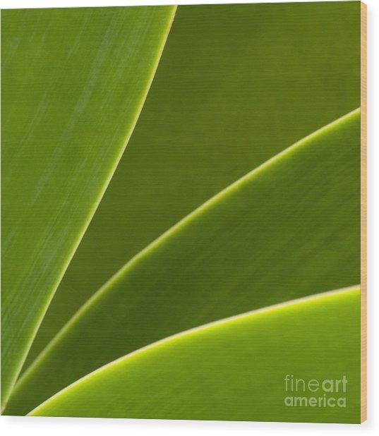 Green Leaves Series  2 Wood Print