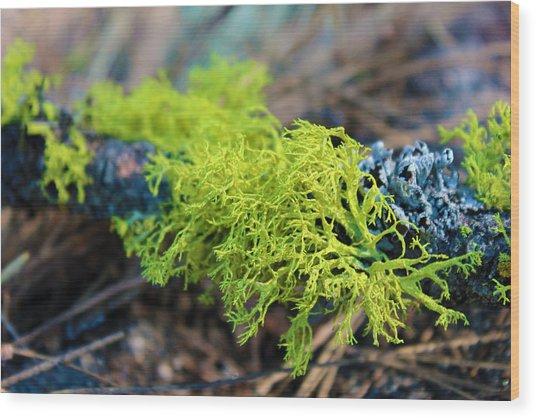Green Lichen Wood Print