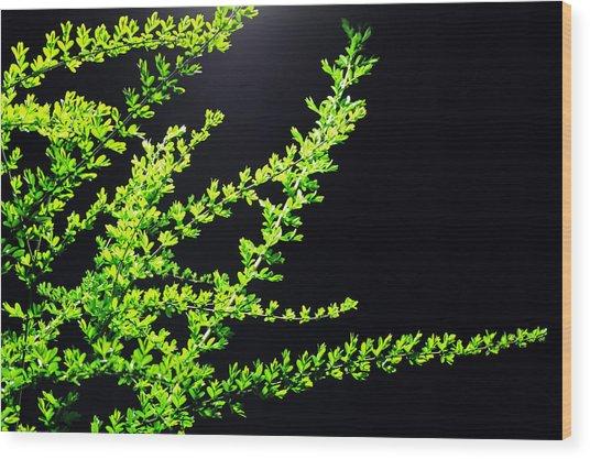 Green No. 10 - Street Lamp Wood Print by Phoresto Kim