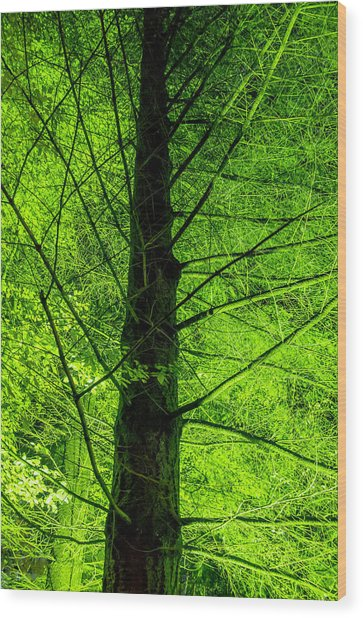 Green On Green Wood Print