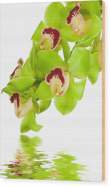 Green Orchid Wood Print by Boon Mee
