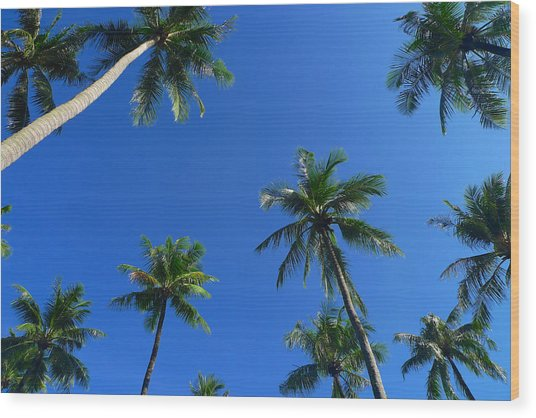 Green Palms Blue Sky Wood Print
