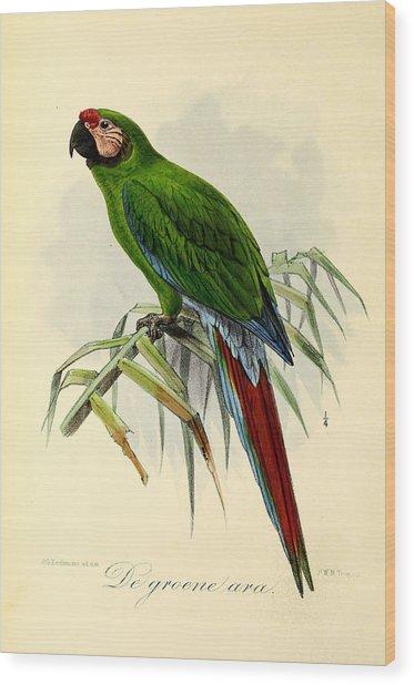 Green Parrot Wood Print