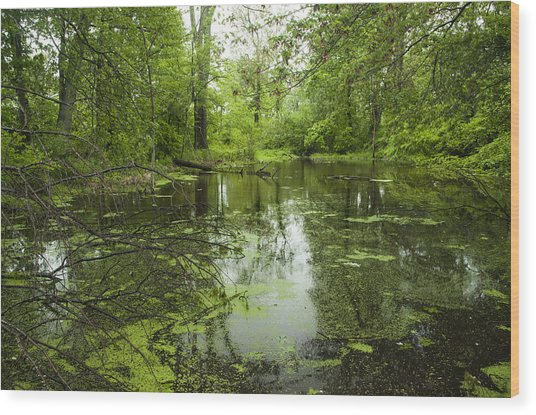 Green Blossoms On Pond Wood Print