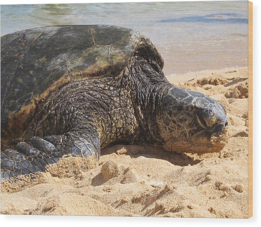 Green Sea Turtle 2 - Kauai Wood Print