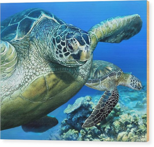 Green Sea Turtle Wood Print by Owen Bell