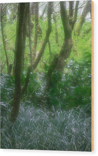 Green Study Wood Print by Kim Lessel