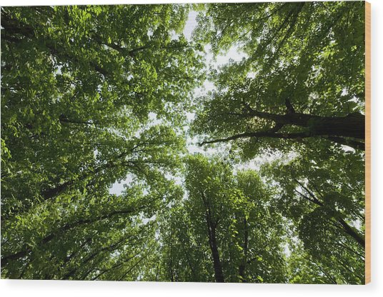 Green Summer Trees Wood Print by Ioan Panaite