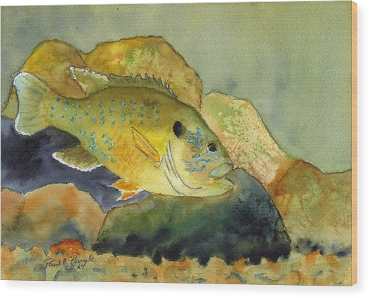 Green Sunfish Wood Print by Paul Temple