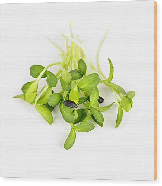 Green Sunflower Sprouts Wood Print