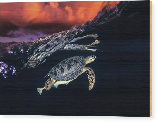 Green Turtle And Sunset - Sea Turtle Wood Print by Barathieu Gabriel