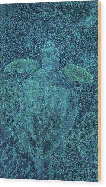 Green Turtle Hidden In Coral Wood Print