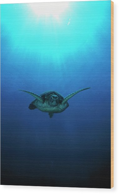 Green Turtle Wood Print
