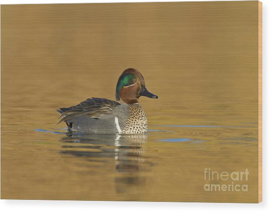 Green Wing Teal Wood Print