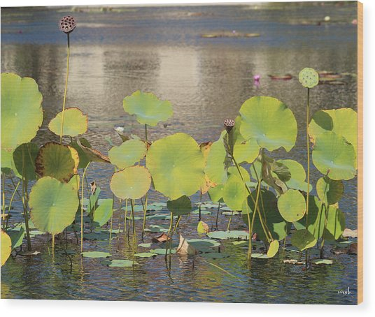 Greens On A Pond 3 Wood Print by Mark Steven Burhart