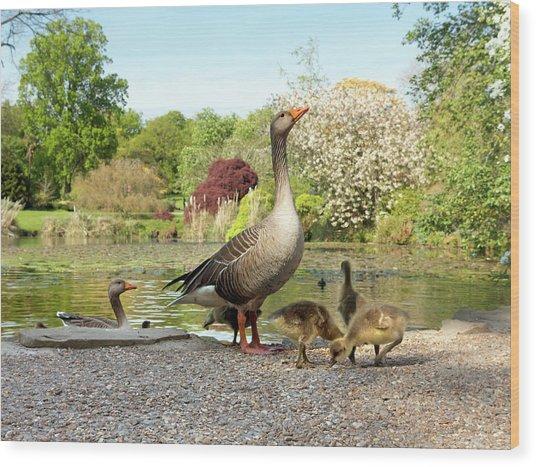 Grey Geese And Goslings Wood Print
