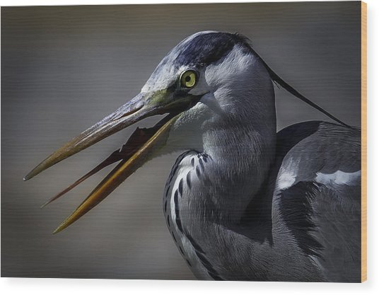 Grey Heron Profile With Open Beak Wood Print by Wild Artistic