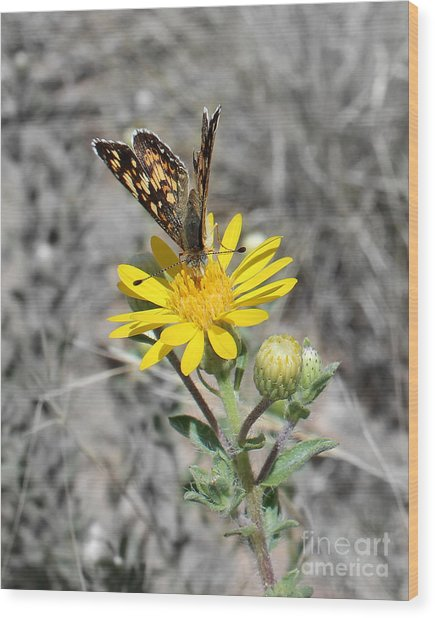 Greyed Butterfly Wood Print