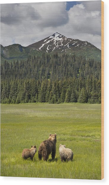 Grizzly Bear Mother And Cubs In Meadow Wood Print