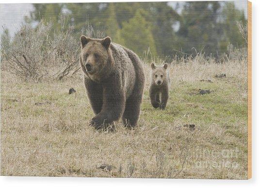 Grizzly Family At Fishing Bridge Wood Print by Bob Dowling
