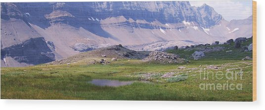 Grizzly Meadows Wood Print