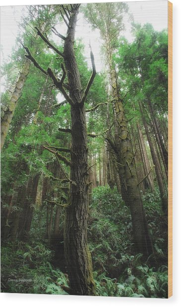 Groovin With The Redwoods Wood Print