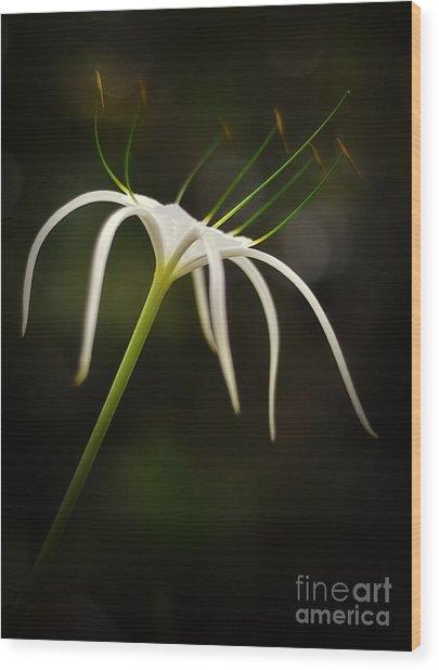 White Spider Flower Wood Print