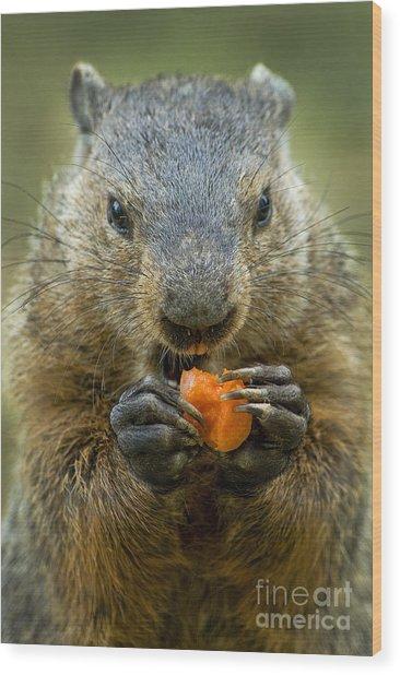 Groundhogs Favorite Snack Wood Print