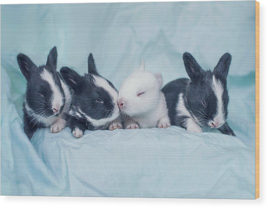 Group Of Four Newborn Baby Bunnies Wood Print by Ashraful Arefin Photography
