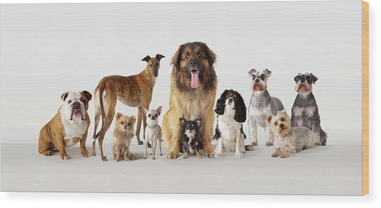 Group Portrait Of Dogs Wood Print by Compassionate Eye Foundation/david Leahy