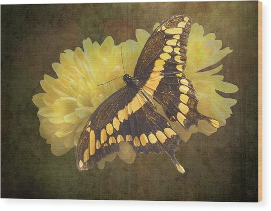 Grunge Giant Swallowtail-1 Wood Print