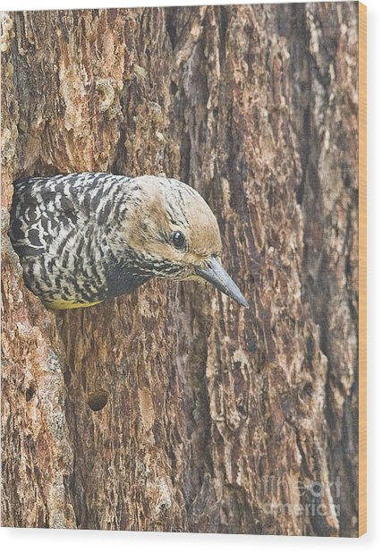 Guarding The Nest Wood Print by Bob Dowling