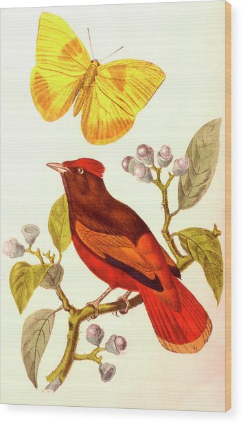 Guianan Red Cotinga And Butterfly Wood Print