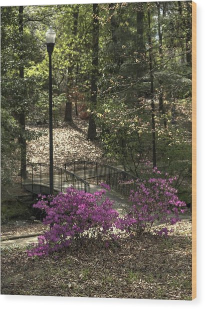 Guignard Park-2 Wood Print