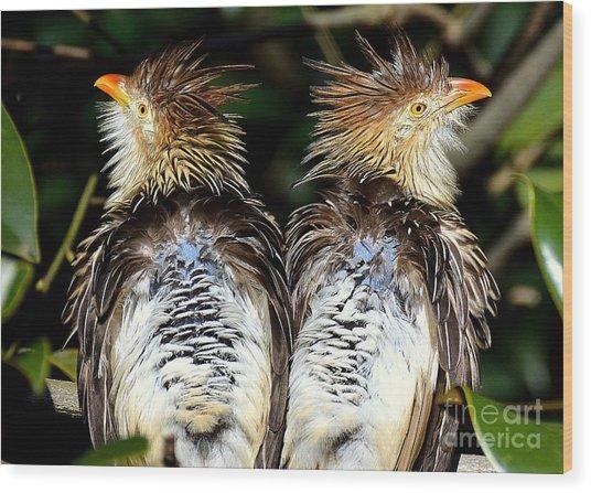 Guira Cuckoos Wood Print