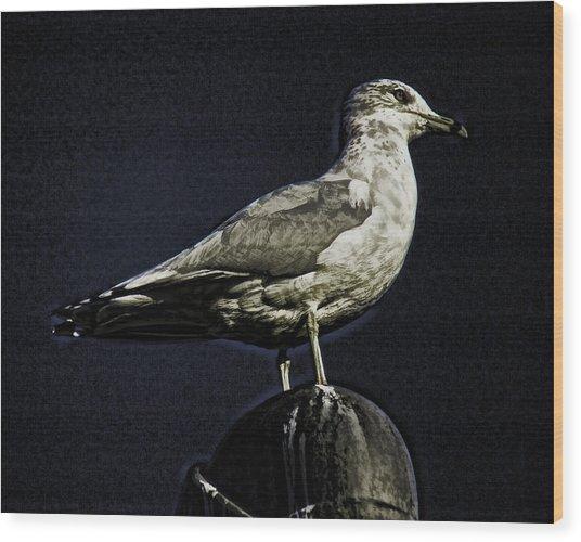Gull At Sundown Wood Print by Joe Bledsoe