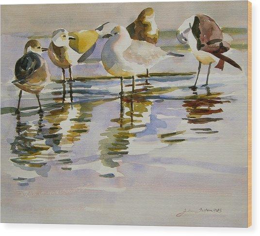 Gull Family Wood Print