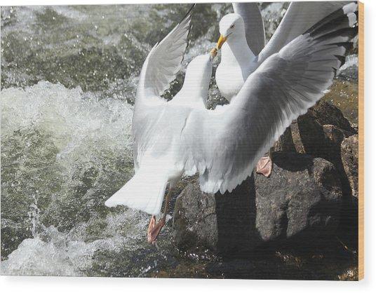 Gull Greeting Wood Print